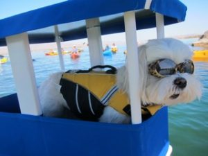 This dog goes kayaking!
