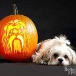 cute dog near pumpkin