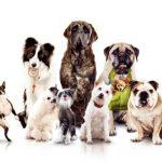 Health found in a hound!