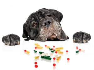 In home pet care and pills