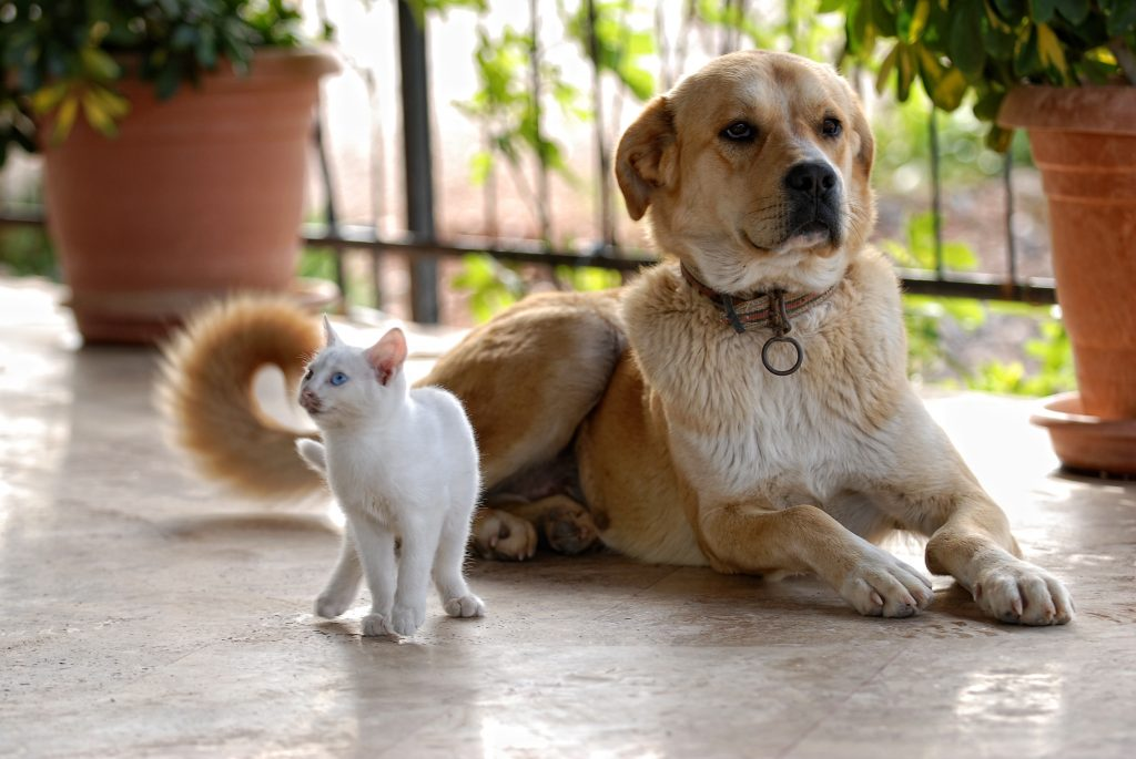 Dog & Cat shutterstock_51362764