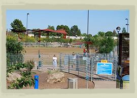 Dog Park North Scottsdale Az