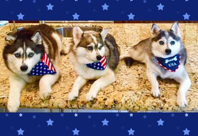 John Leonesio Dog Sitter Review - Doolittle's Doghouse
