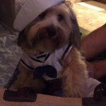 Louis the Sailor