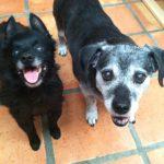 Obie and Lila