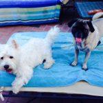 Pico and Tyson