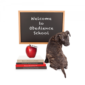 Dog Training in Arizona by Doolittle's Doghouse
