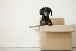 Dog care when moving