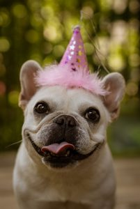 Dogs aging faster than humans