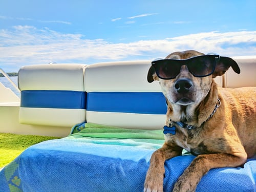 Keeping dogs cool in the summer